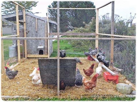 backyard chicken blogs 29 best images about garden ideas on pinterest save