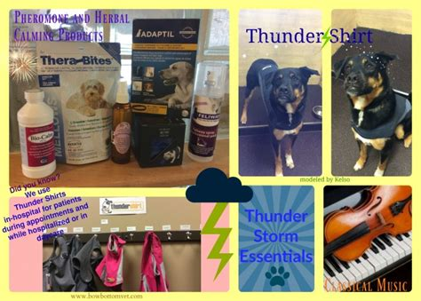 How To Comfort A During Thunderstorms by How To Comfort Your Pet During Thunder Storms Bow Bottom