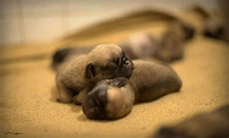 born puppies newborn puppies pictures photos and images for and