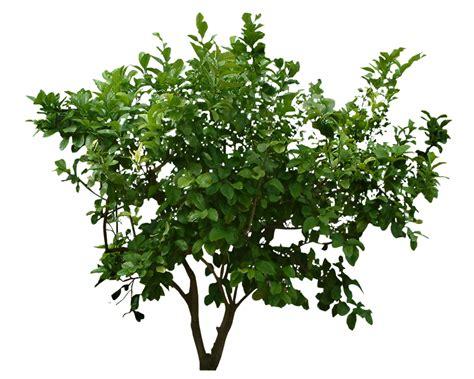 Bild Mit Echten Pflanzen by Plants Png Transparent Plants Png Images Pluspng