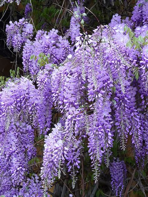 essential trees and shrubs for the eastern united states the guide to creating a sustainable landscape books 1000 images about what flower is this on