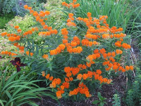 Rotary Gardens Janesville Wi | Klick Here to Find