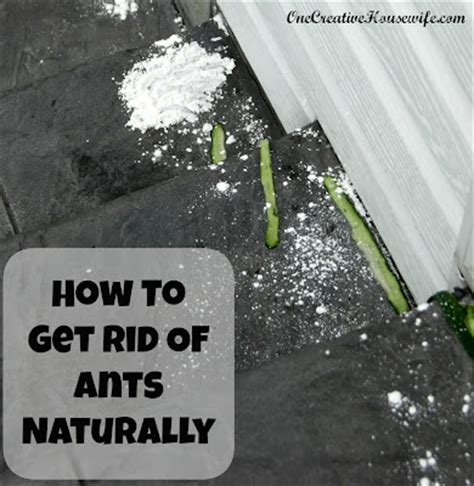 how to get rid of ants in kitchen and bathroom how to get