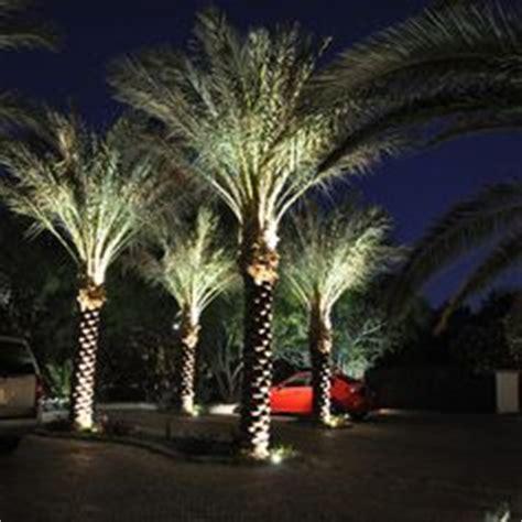 uplighting landscape signature palms the light
