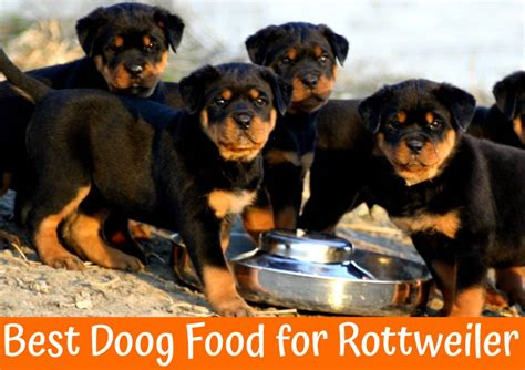 best food for a rottweiler how to choose the best food for rottweiler us bones