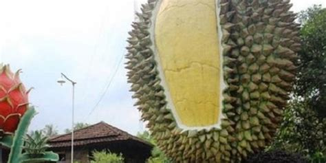 wow hutan durian terbesar  dunia   indonesia
