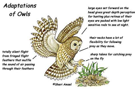 mr mrs barred owl barred owl biology