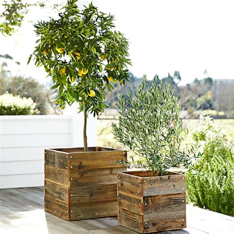 planters for trees growing citrus trees in pots the tree center