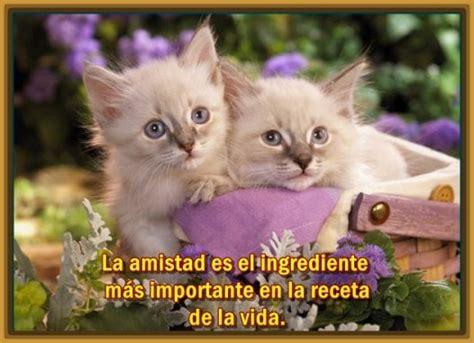 imagenes tiernas gatitos bebes imagenes tiernas de gatitos con frases para bajar