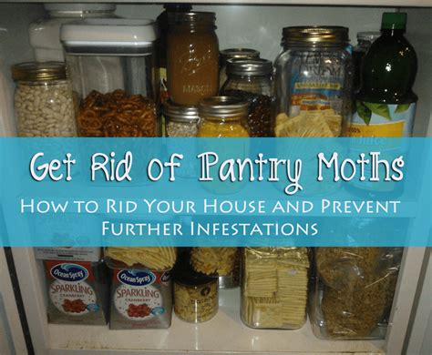 How To Get Rid Of Moth Larvae In Kitchen by Get Rid Of Pantry Moths The Herbal Spoon