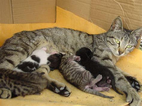 alimentazione gattini 2 mesi cosa da mangiare al gatto che allatta lettera43 it