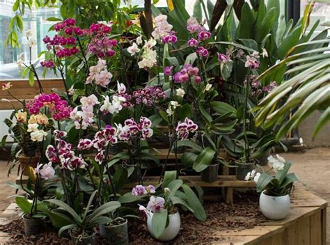 how to decorate a garden orchid flowers 30 beautiful ideas for exotic garden design and backyard