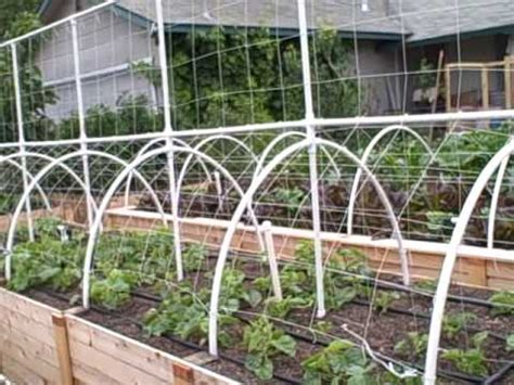 Raised Bed Tomato Trellis Growing Melons Vertically On A Trellis The Square Foot
