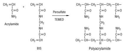 How Does Mba Cross Link Acrylamide next biotechnology news ebio world polyacrylamide gels
