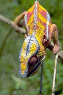 animal that changes color animal color change animal color change howstuffworks