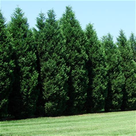best tree sales idaho trees trees for sale fast growing trees