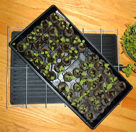Growing Mats by Plant Growing And Seed Warming Mat