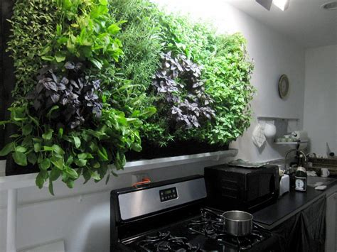 grow herbs in kitchen massive kitchen wall herb garden growing herbs