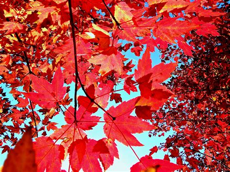 fall desktop wallpaper tumblr autumn leaves background tumblr wallpaper snapchat