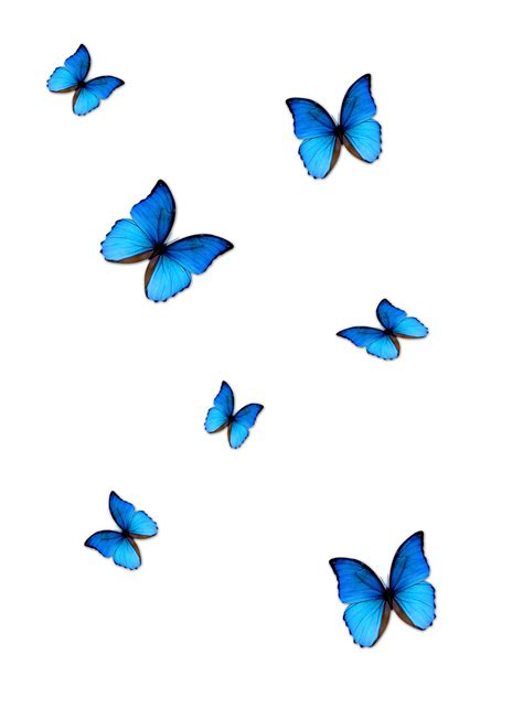 lightroom butterfly effect editing butterfly png