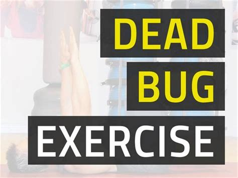 dead bug exercise  strong abs proper posture