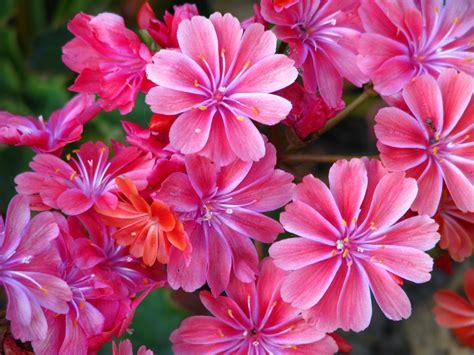 mooie bloemen afbeeldingen mooie bloemen google zoeken bloemen pinterest