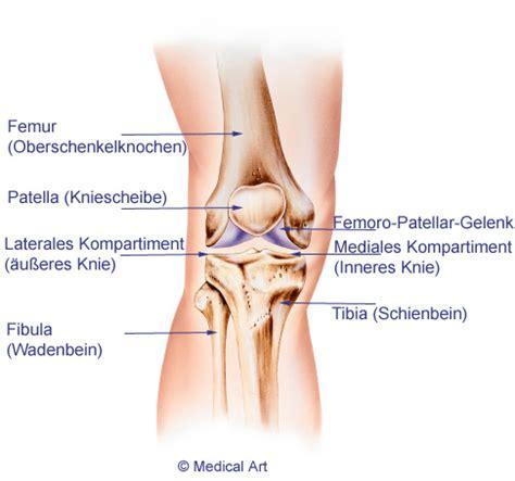knieschmerzen innen knieschmerzen verstehen harmlose schmerzen oder gefahr