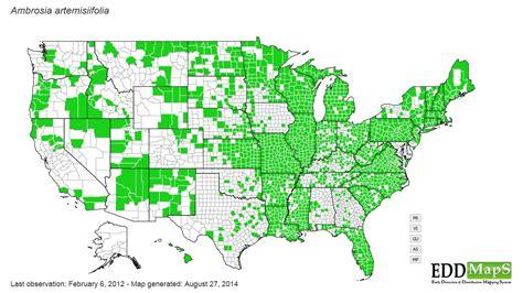 ragweed map usa common ragweed ambrosia artemisiifolia n a asterales