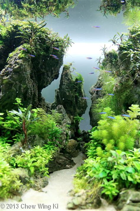 aga aquascape 2013 aga aquascaping contest entry 315