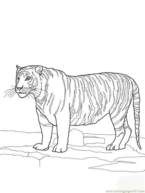 clemson tiger coloring page clemson paw print coloring page coloring pages