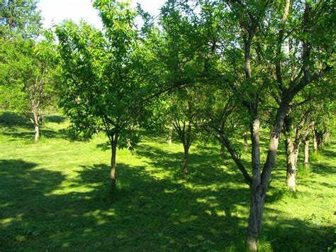 pin summer trees grass background download widescreen