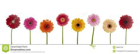 imagenes de flores libres flores bonitas im 225 genes de archivo libres de regal 237 as