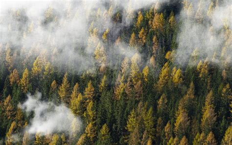 ny forest wood cloud foggy mountain nature wallpaper