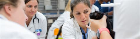 Sgu Mba Accreditation by 7 Year Doctor Of Veterinary Medicine Begin With The Pre