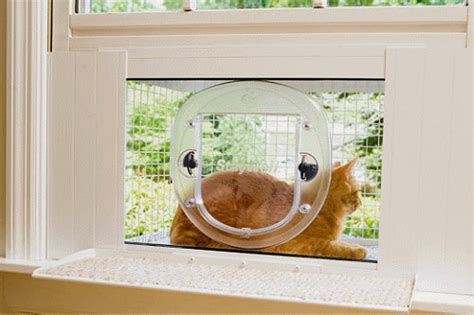 window box for cats cat window box spoiled kitties