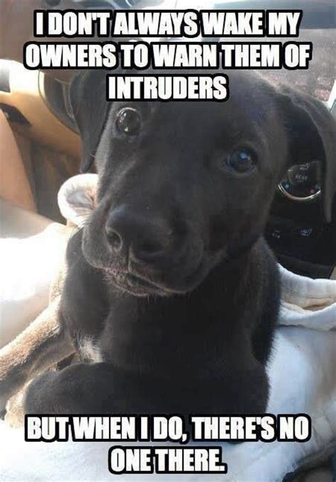 Funny Puppy Memes - best 230 funny pets images on pinterest animals and pets