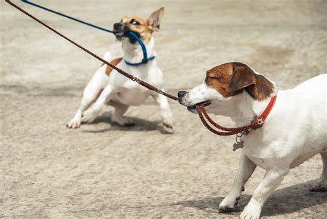 how to stop from pulling on leash how to stop a from biting and pulling on leash