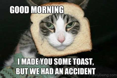 Cat Toast Meme - 25 good morning memes to kickstart your day sayingimages com
