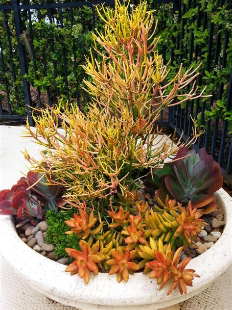 Driftwood Vase Astonishing Succulents Garden Decoration Design With