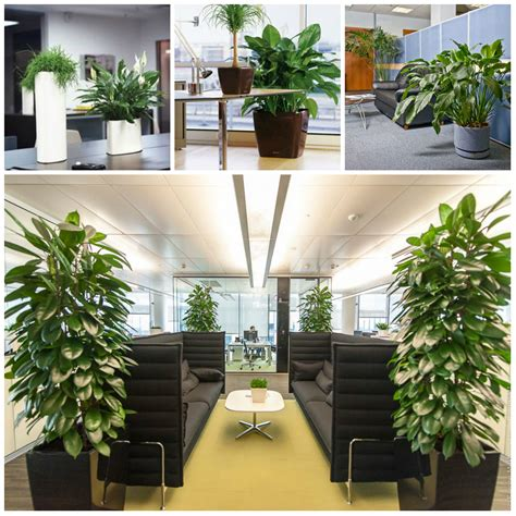 plants for office plants for the office office plants