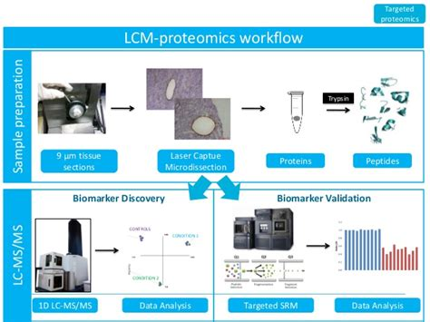 proteomics workflow overview radboudumc center for proteomics glycomics and