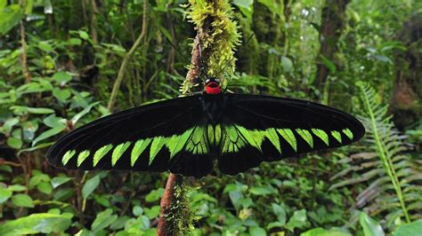 Malaysia butterflies insects nature wallpaper