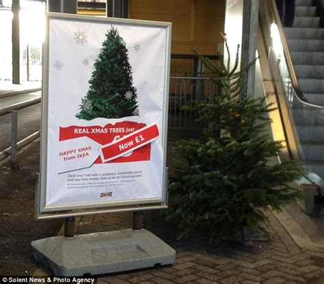 stores selling real christmas trees now that s an austerity tree ikea slashes price of festive firs to just 163 1 daily
