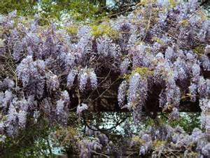 purple vine plant by flameworthy on deviantart