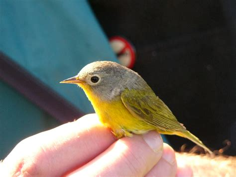 the zen birdfeeder science