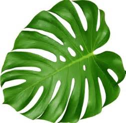 house plants with large leaves