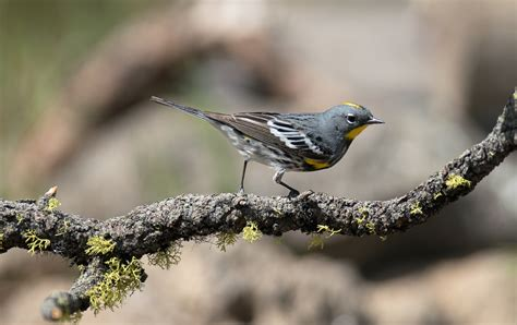 central oregon birds fm forums