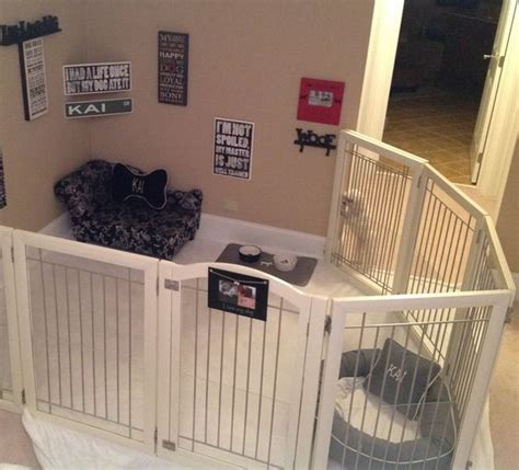 room of puppies rooms dogs and plays on
