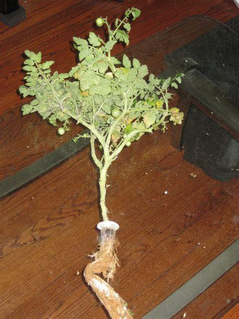 aerogarden ultra led weed garden ftempo