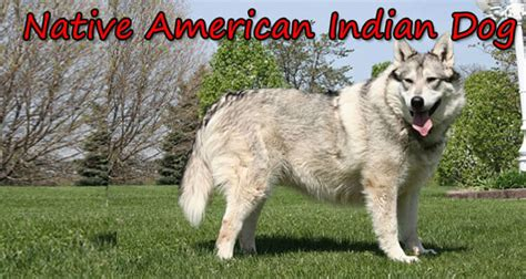 American Indian Shedding by American Indian Character Appearance And Pictures